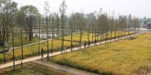 Landscape of the year: Turenscape_Peasants and their Land, The Recovered Archaeological Landscape of Chengtoushan