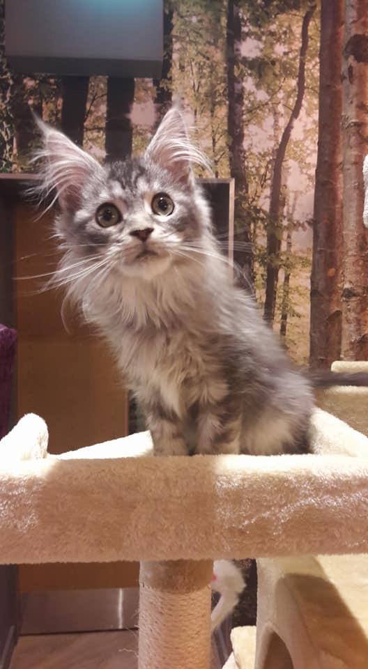Cat Rescue Centres In Harrogate